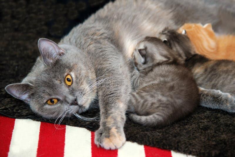 母性和爱 库存照片