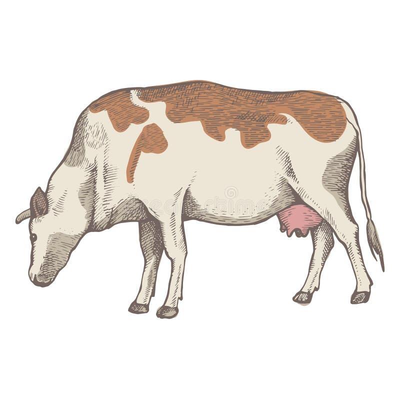 母牛吃着草 向量例证