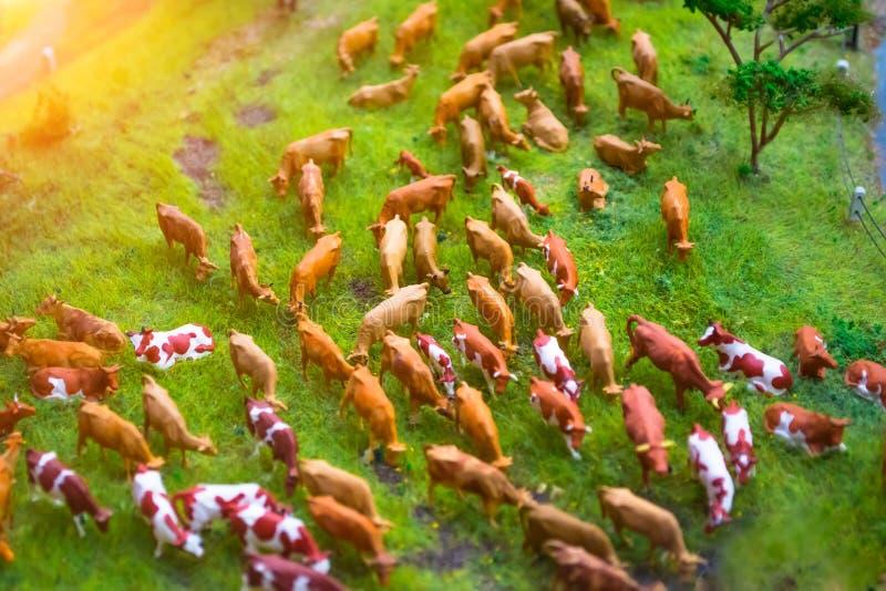 母牛微型玩具牧群在种田风景,顶视图的草甸的 免版税图库摄影