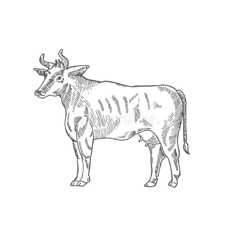 母牛手拉的传染媒介例证 抽象家畜剪影 板刻样式图画 皇族释放例证