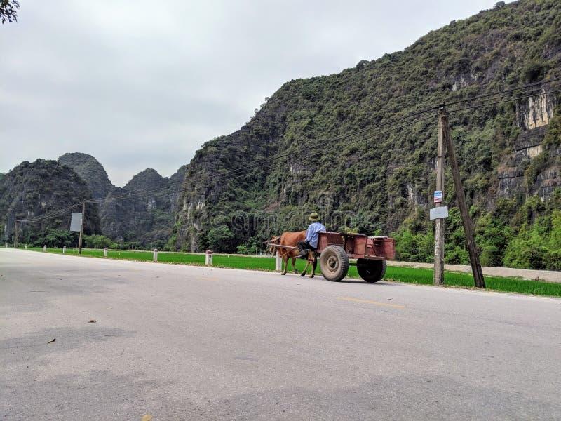 母牛支架的越南农夫 免版税图库摄影