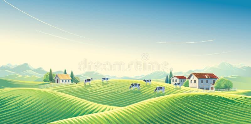 母牛牧群在夏天农村风景的 皇族释放例证