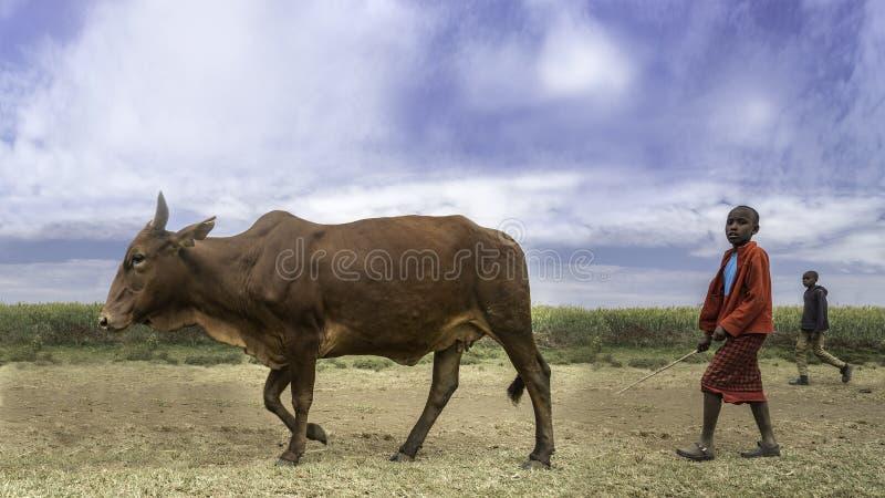 母牛男孩 免版税库存图片