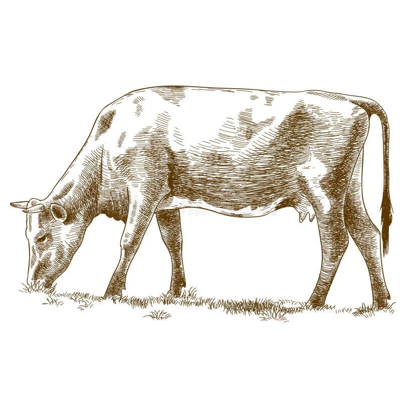 母牛的板刻例证 向量例证