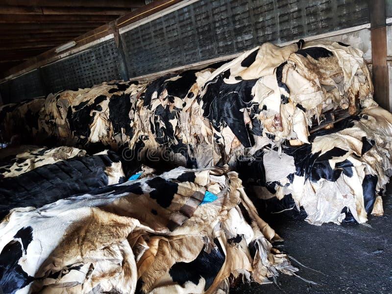 母牛皮革原料 库存图片