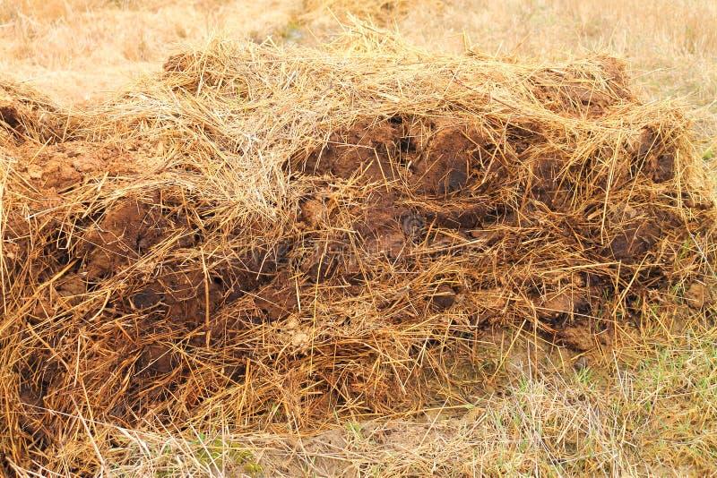 母牛肥料堆  库存图片