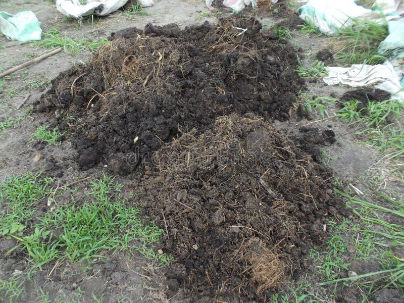 母牛肥料 库存图片