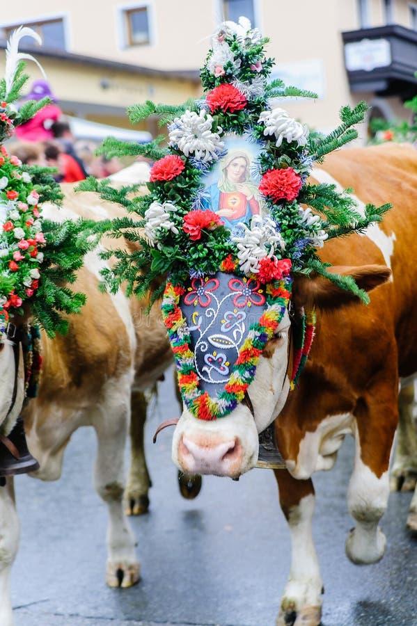 母牛节日在奥地利 免版税库存照片