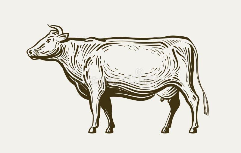 母牛身分,看法外形 牲口,牛肉,牛奶 剪影传染媒介例证 向量例证