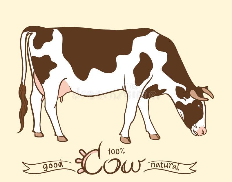 母牛 吃草的母牛 被隔绝的母牛,套元素 皇族释放例证