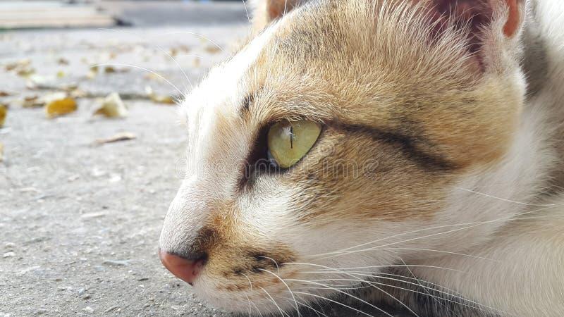 母猫今后看 免版税库存照片