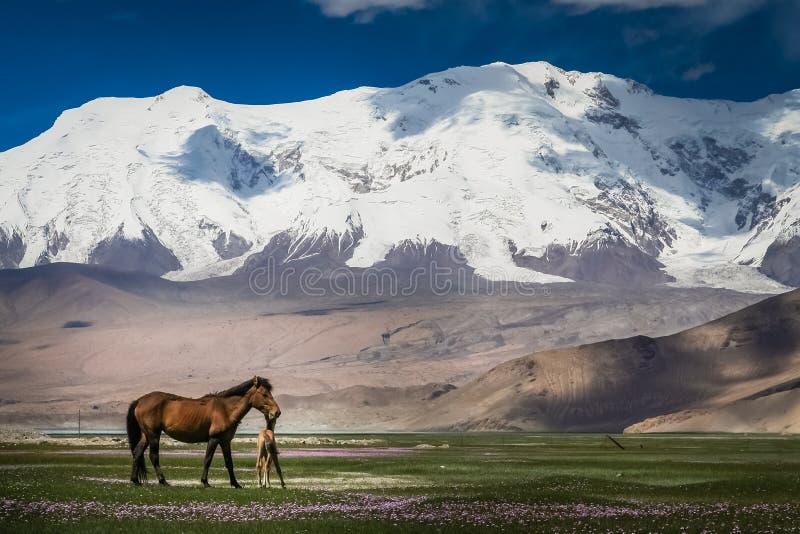 母马和马驹在草甸 库存照片