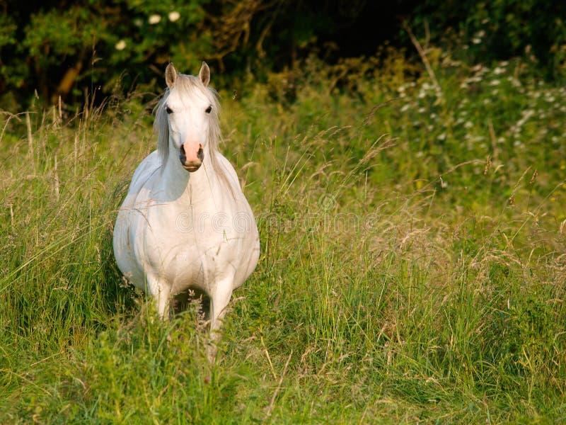 母马在小牧场 库存照片