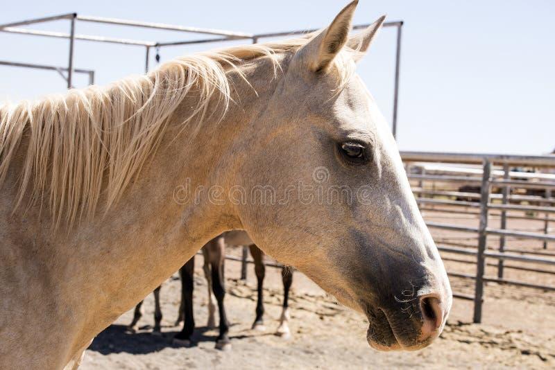 母马在畜栏02 免版税库存照片
