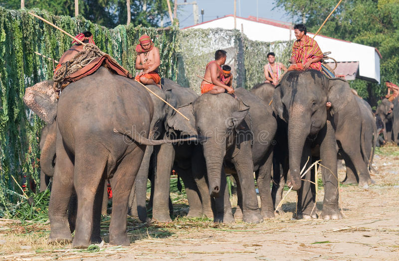 每年大象召集surin泰国 免版税库存图片