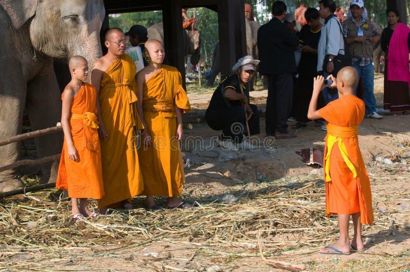 每年大象召集surin泰国 库存图片