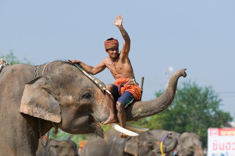 每年大象召集surin泰国 库存照片