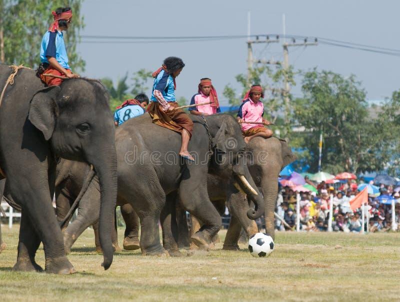 每年大象召集surin泰国 免版税库存照片