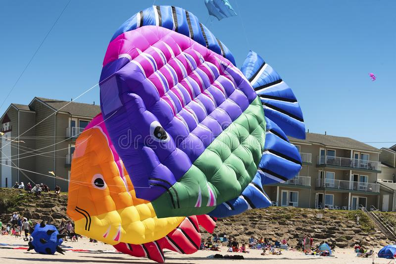 每年风筝飞行节日 免版税图库摄影