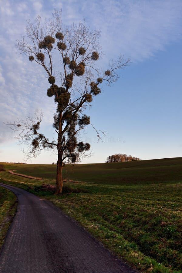 比利时迪南乡的树寄生园地夕阳 免版税库存图片