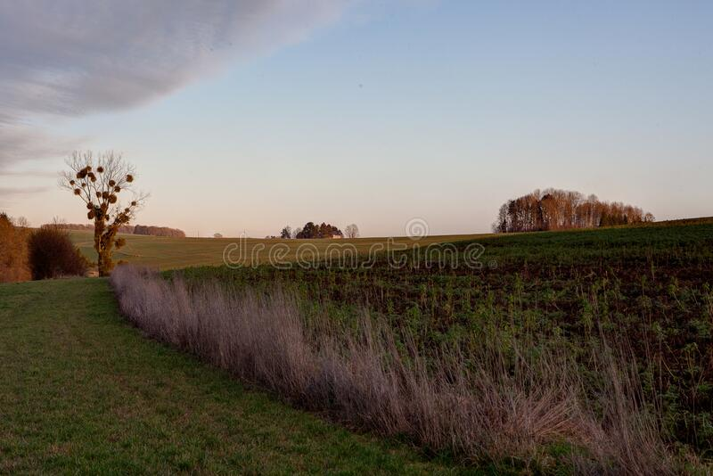 比利时迪南乡的树寄生园地夕阳 库存图片