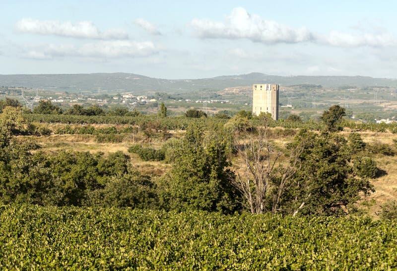 比利牛斯山的葡萄园 免版税库存图片
