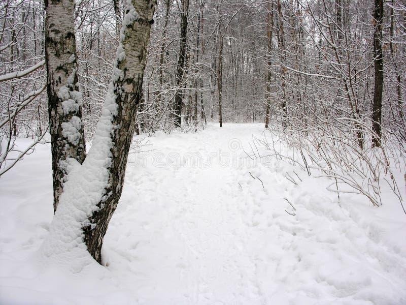 比喻冬天 免版税图库摄影
