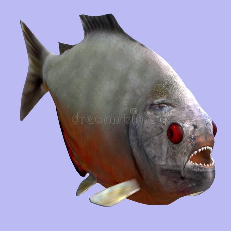 比拉鱼 向量例证