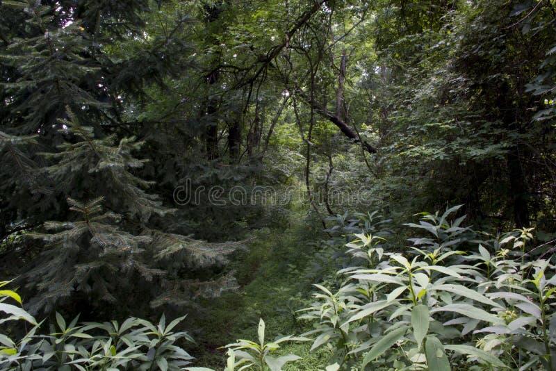 比赛足迹通过森林 免版税库存照片