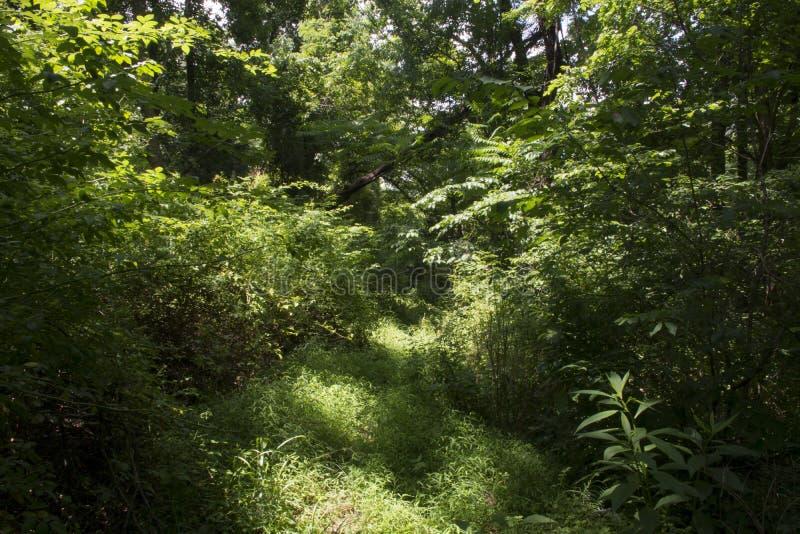 比赛足迹通过森林 免版税库存图片