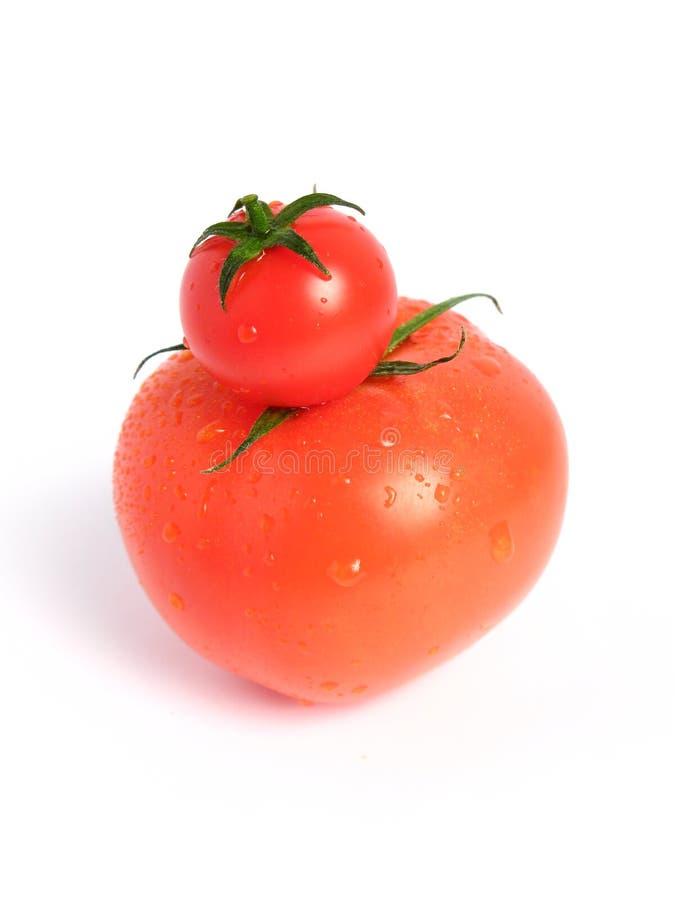 比较蕃茄 库存图片
