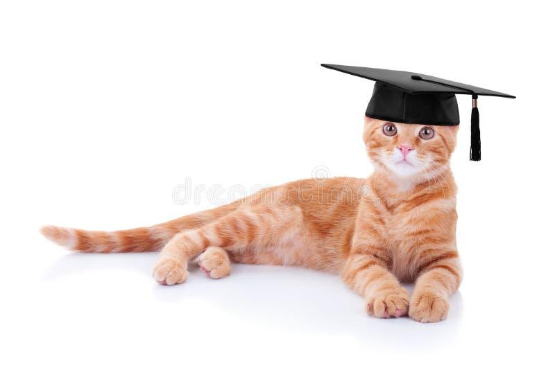 毕业生毕业猫 库存照片