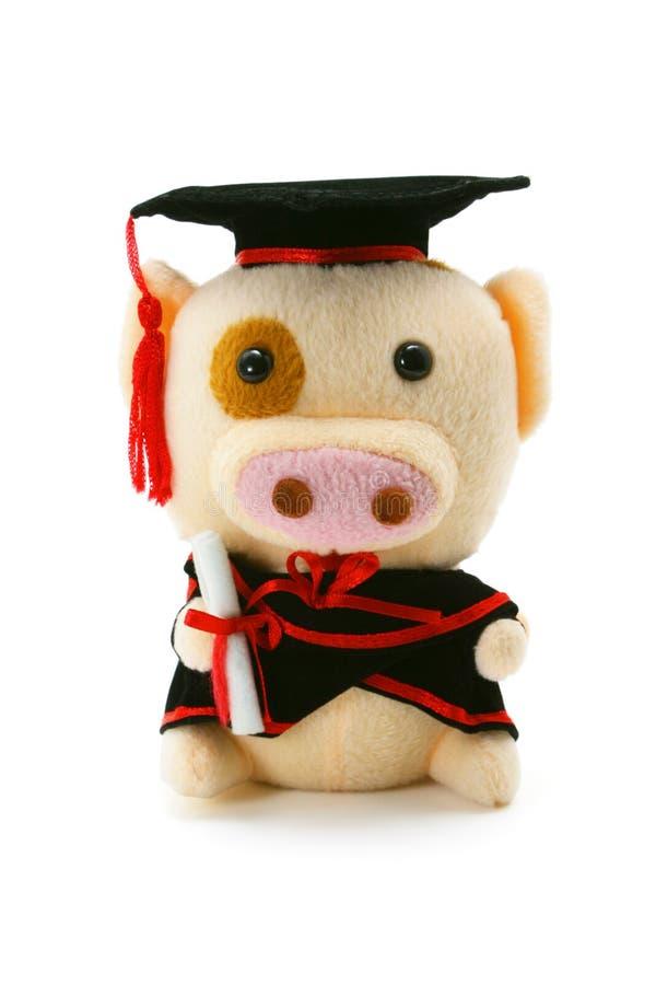 毕业贪心软的玩具 库存照片