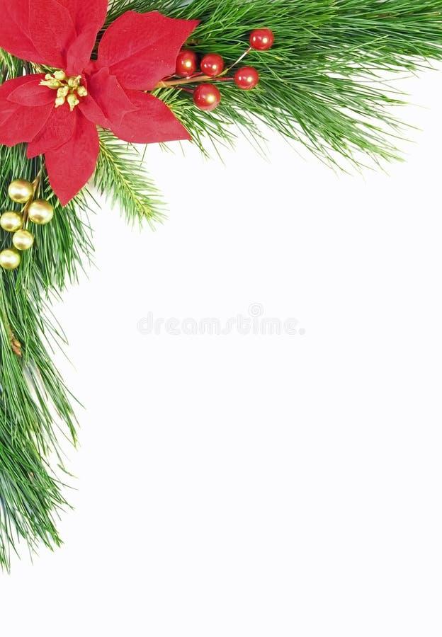 毗邻圣诞节常青树 库存照片