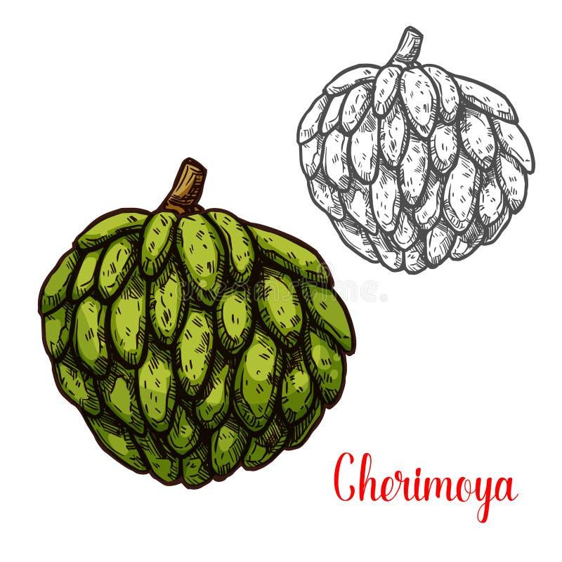 毛叶番荔枝,热带水果南美番荔枝剪影  库存例证