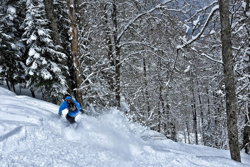 毛皮下雪结构树 免版税库存照片