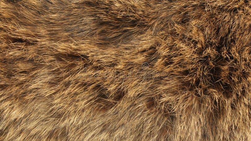 毛皮-狐狸纹理-高分辨率 库存照片