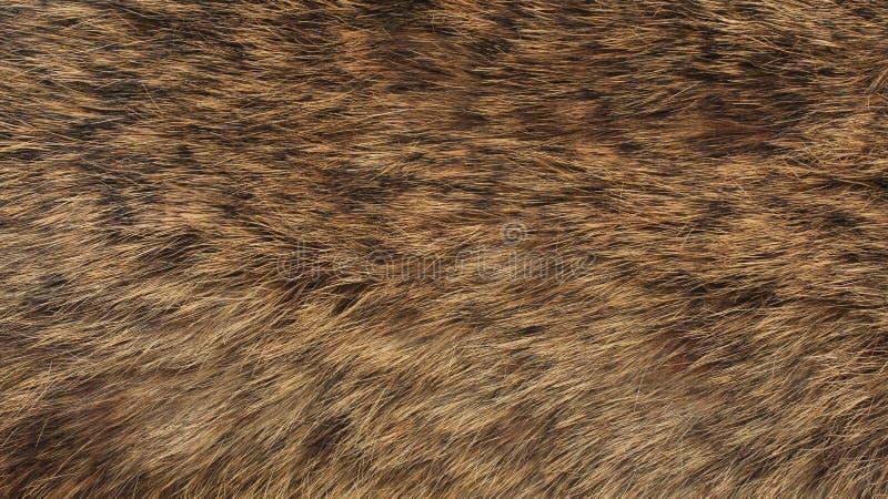 毛皮-狐狸纹理-高分辨率 免版税库存照片