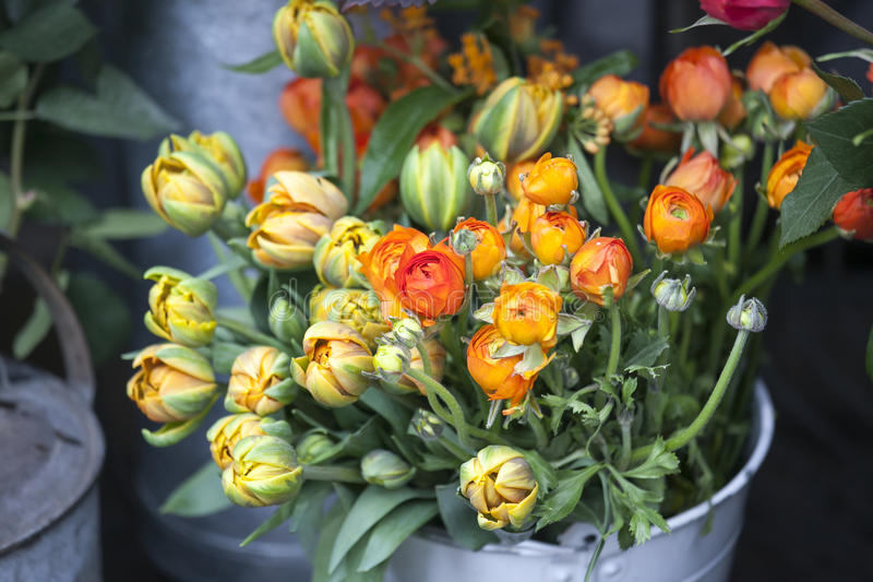 毛茛属和郁金香背景的,美丽的春天花,葡萄酒花卉样式 免版税库存照片