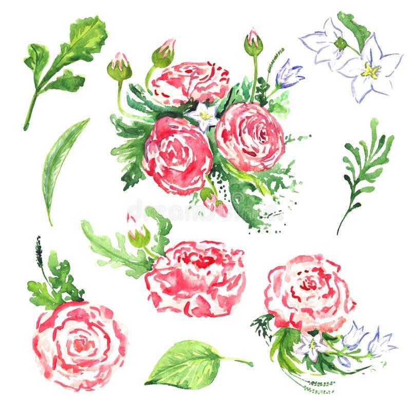 毛茛属桃红色花、白色风铃草和叶子 皇族释放例证