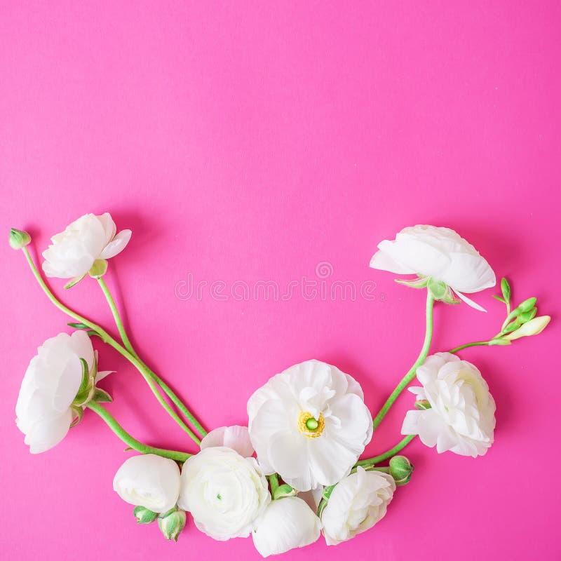 毛茛属花和芽 花卉样式由白花制成在桃红色背景 平的位置,顶视图 库存图片