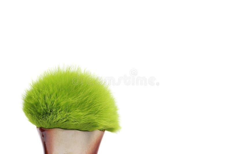 毛茸的绿色 库存图片