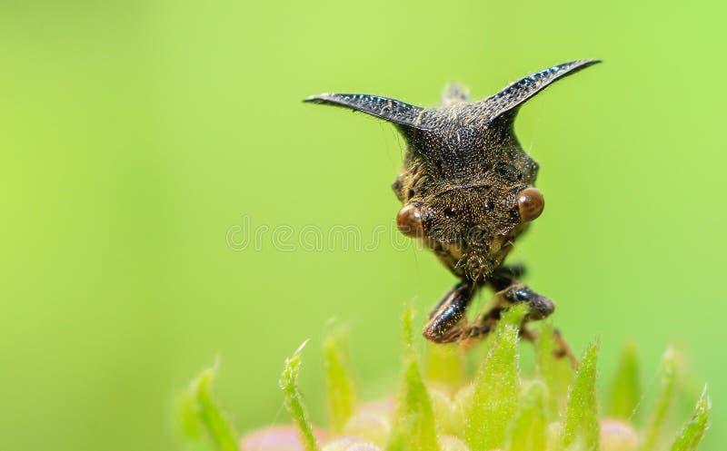 毛虫昆虫达卡 免版税库存图片
