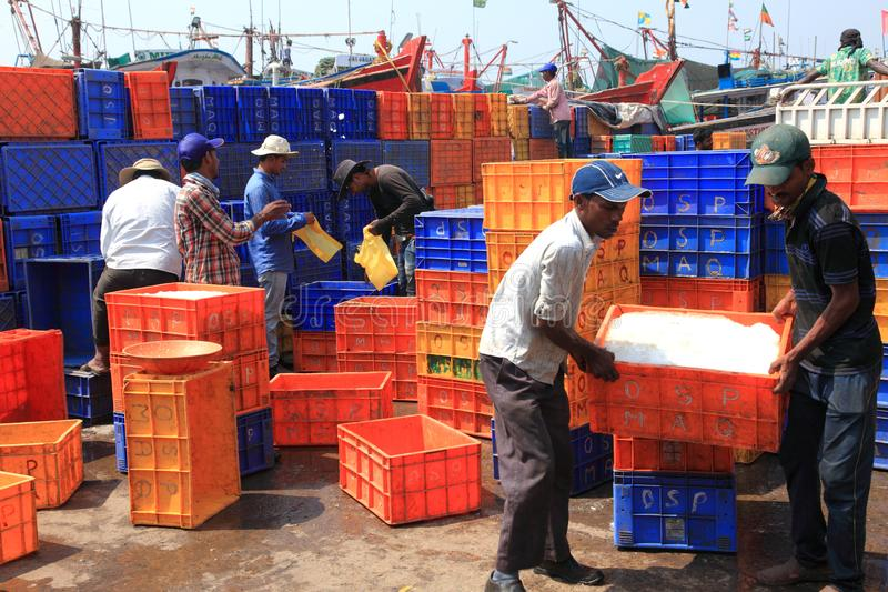 民工用鱼和冰填装条板箱在老钓鱼海港 库存图片