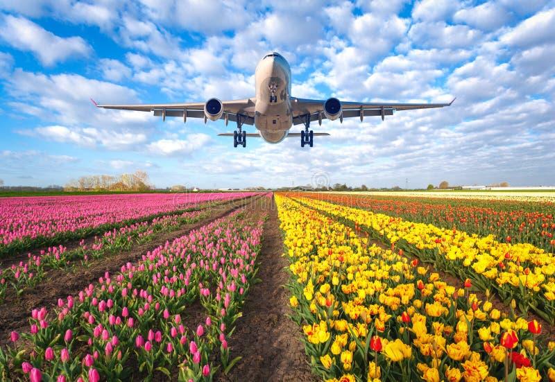 民航飞机和郁金香 免版税库存照片
