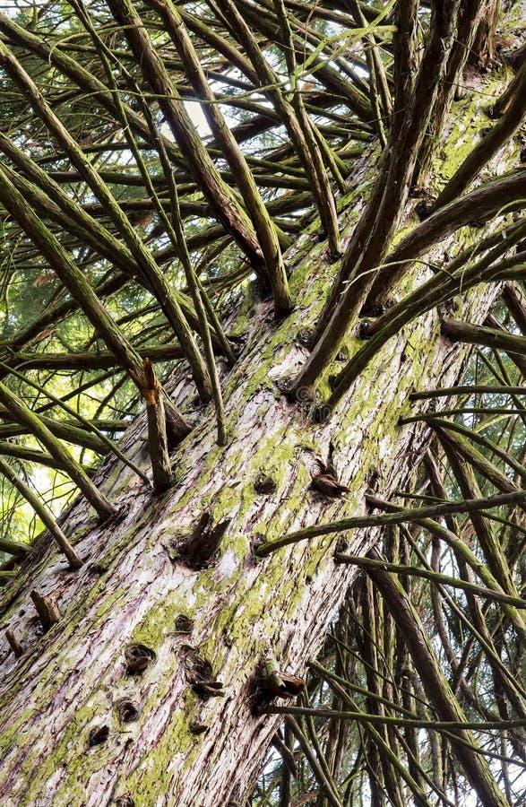 气候变化,全球性变暖-干燥树干和分支 库存照片