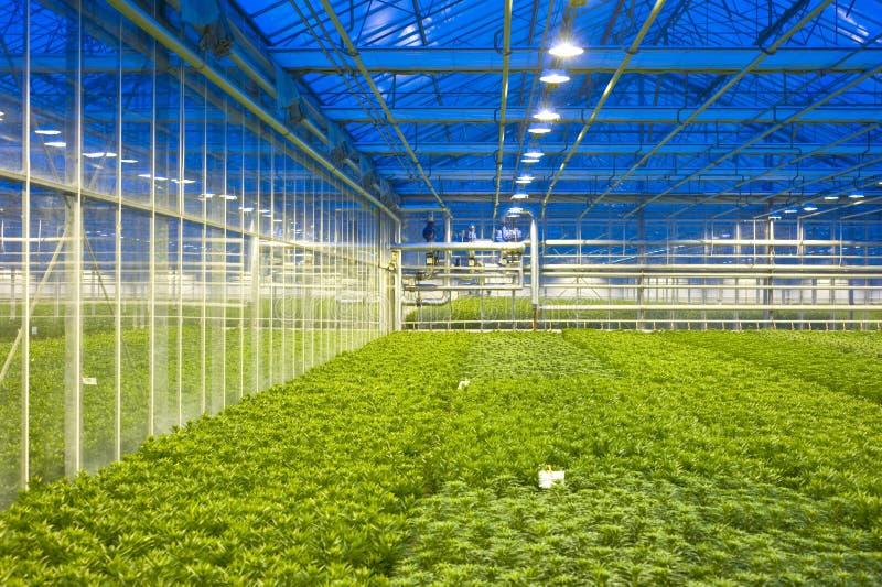 气候控制玻璃温室 免版税库存图片