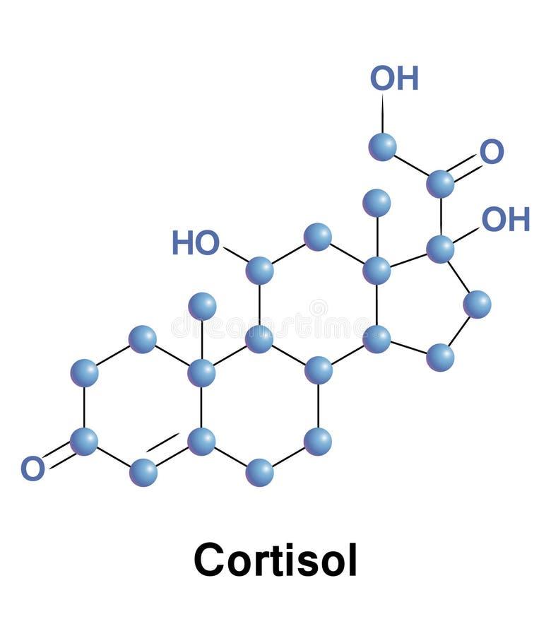 氢化皮质酮是一个甾类激素 皇族释放例证