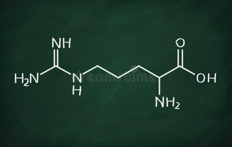 氨基胍基戊酸 向量例证