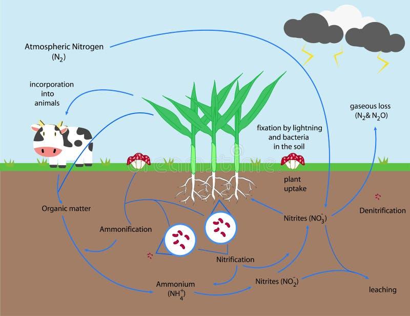 氮循环 库存例证